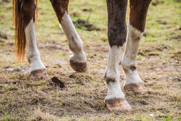 Brown horse legs and hooves on the field