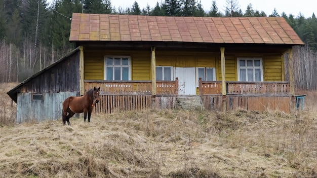 Коричневая лошадь возле деревянного старого деревенского дома. рядом красивый лес и горы. украина, яремче - 20 ноября 2019 года.