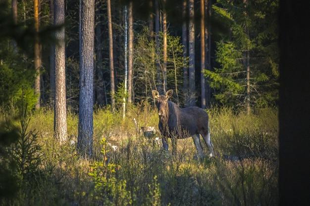 緑の芝生のフィールドに茶色の馬