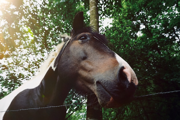 Brown horse portrait in the farm in the nature