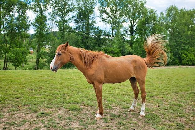 Коричневая лошадь, стоящая на зеленом пейзаже рядом с деревьями