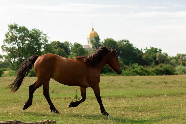 Brown horse walks in pasture
