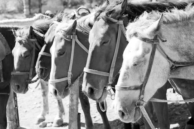 Коричневые лошади на ранчо