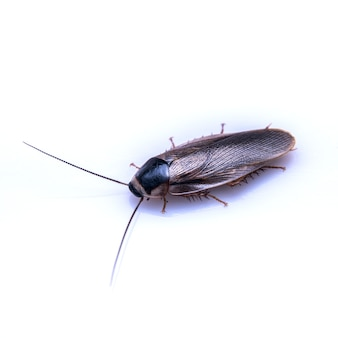 Brown insect on white backdrop