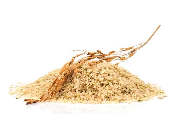 브라운 재스민 쌀 씨앗과 고립 된 쌀의 귀.