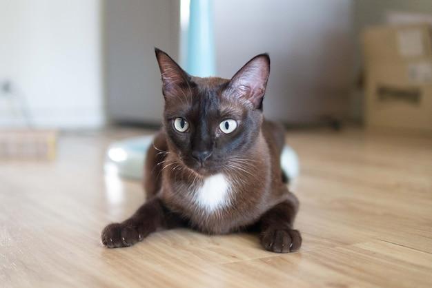 Коричневый котенок кошка сидит на деревянном полу, глядя на что-то с любопытным лицом для выражения лица