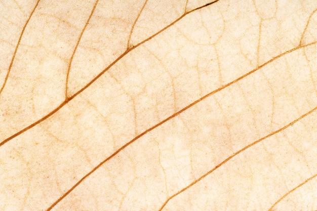 Brown leaf close up. background for design