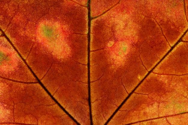 茶色の葉をクローズアップ。デザインの背景