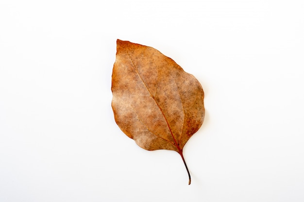 Brown leaf isolated