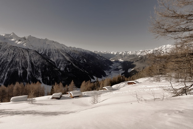昼間の雪による山のカバー近くの茶色の葉の木