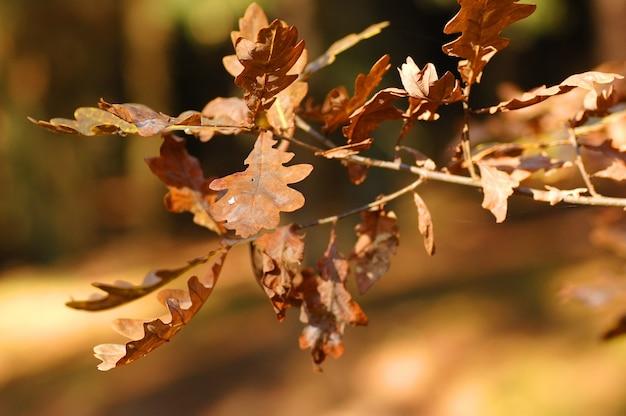 ブラウン、葉