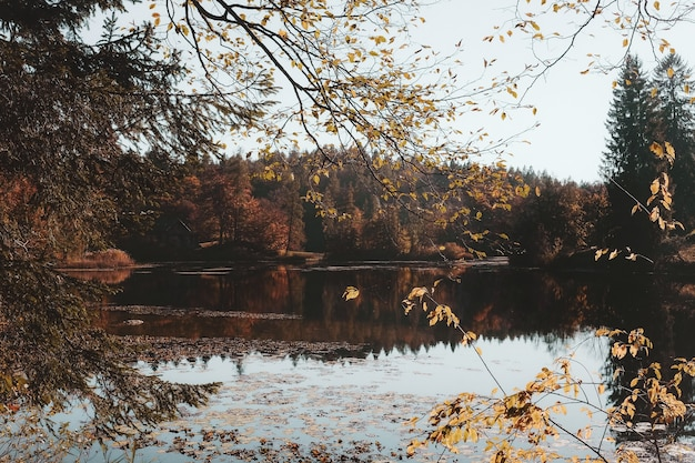 Brown leafed trees beside body of water