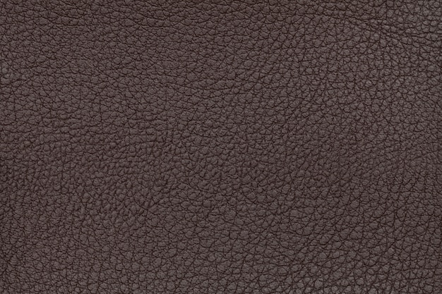Brown leather texture background. closeup photo. reptile skin.