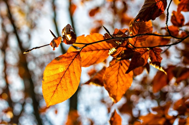 Brown leaves during autumn season at backlight