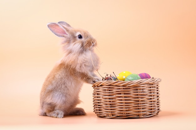 Brown little rabbit stands on a basket with easter eggs.