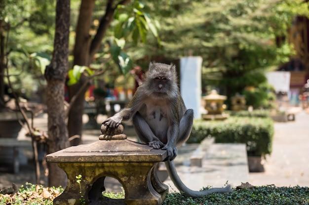 コンクリートの上に座っている茶色の猿
