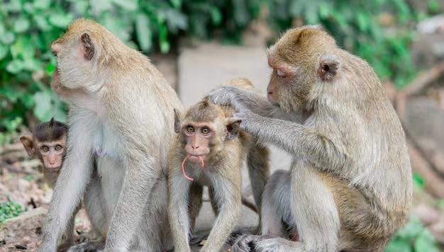 Brown monkeys happy family