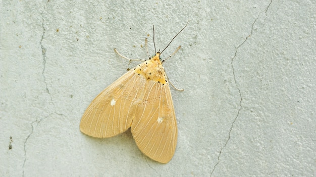 Brown moth on a gray cement wall.