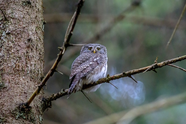 Brown owl perched on tree branch