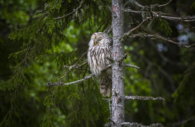 Brown owl sitting on tree branch