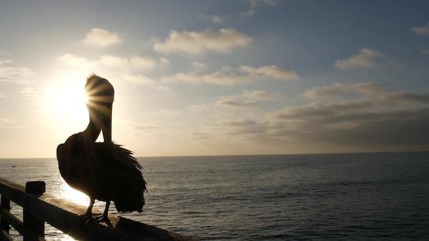 갈색 펠리칸 부두 난간, 오션사이드 보드워크, 캘리포니아 바다 해변, 미국 야생 동물. 펠레카누스 새