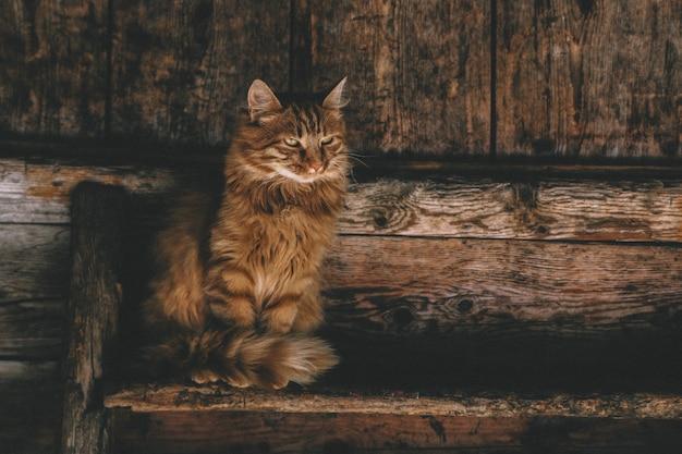 梯子の上の茶色のペルシャ猫