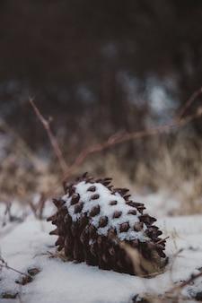 白い砂の上の茶色の松ぼっくり