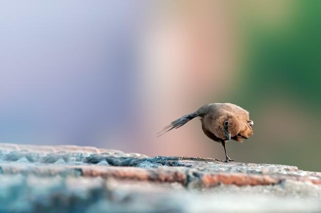 Brown rockchat doing yoga on a wall