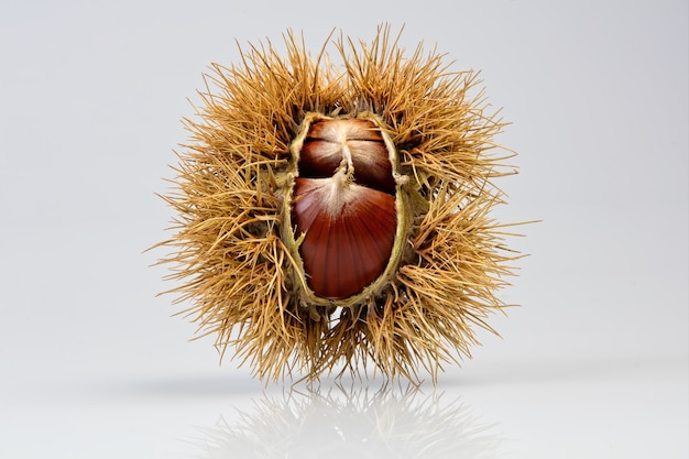白いテーブルの上の茶色の丸い果物