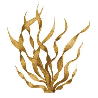 Коричневые водоросли, изолированные на белом. акварель рисованной окрашенные иллюстрации.
