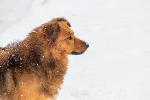 茶色の毛むくじゃらの犬は、降雪の冬のプロファイルでクローズアップ