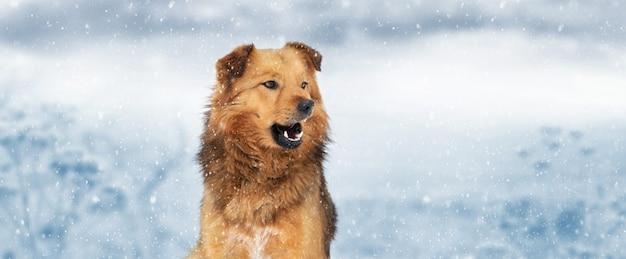 降雪時の屋外の冬の茶色の毛むくじゃらの犬。パノラマ