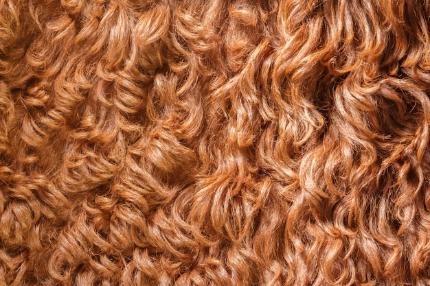 Brown sheared sheep fur. natural sheepskin rug background.