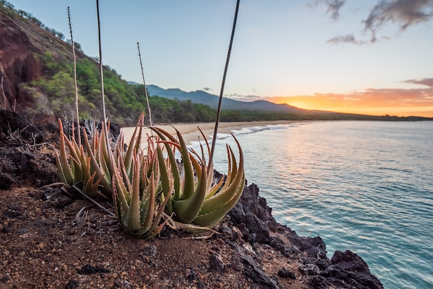 Brown soil near body of water during sunset