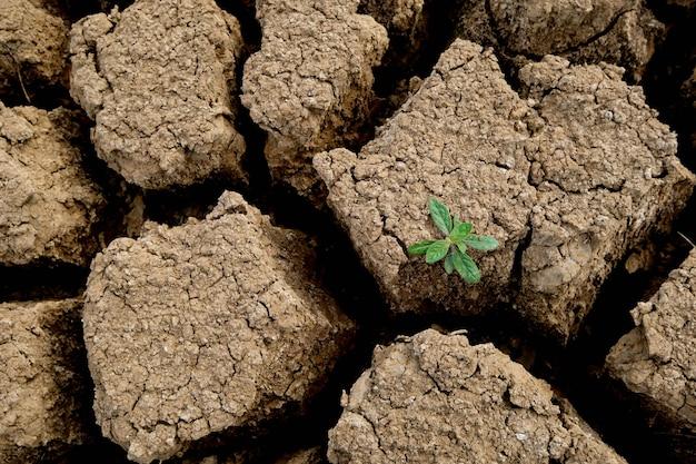 Коричневая почвенная поверхность имеет трещины и зеленые деревья, которые появляются из засушливых. концепция глобального потепления. треснувшая земля текстуры.