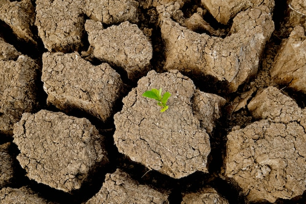 Brown soil surface is cracked and green trees that come from arid. global warming concept. cracked earth texture.
