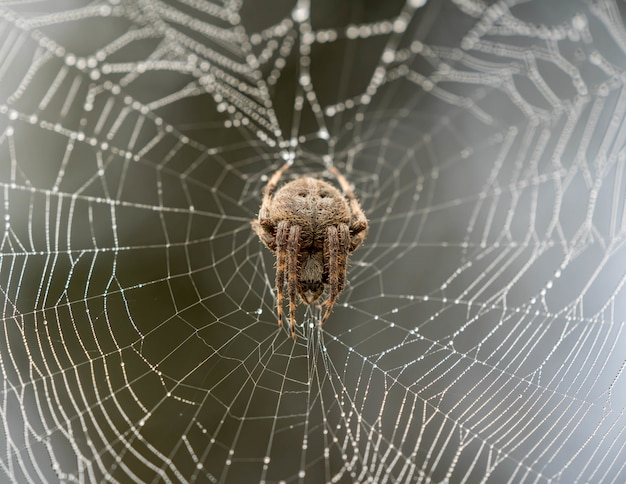 Brown spider climbing on a spider web with a blurry background