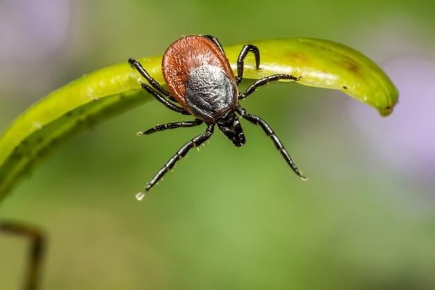 Коричневый паук на зеленом листе крупным планом
