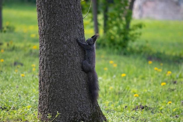 緑の葉の下の木に秋の茶色のリスリスは公園を散歩します