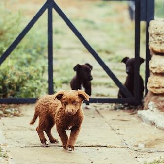 壁の近くの茶色の野良犬