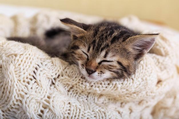 茶色の縞模様の子猫は、ニットのウールベージュのチェック柄で寝ています。