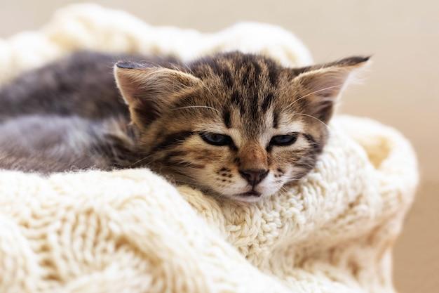 Коричневая полосатая кошечка спит на вязаном шерстяном бежевом пледе. маленький милый пушистый кот. уютный дом.
