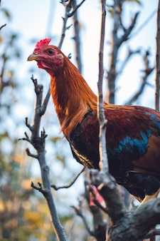 Brown and teal chicken on tree branch Free Photo