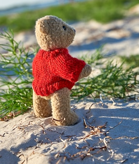 Brown teddy bear in a red sweater stands on the sandy seashore
