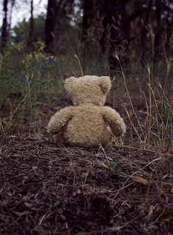 Brown teddy bear sits back in the middle of a sandy road in the forest