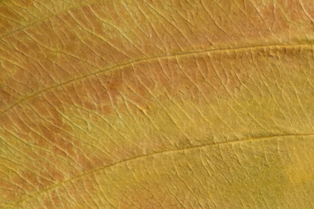 마른 잎의 갈색 질감