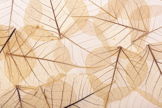 Brown textured leaves