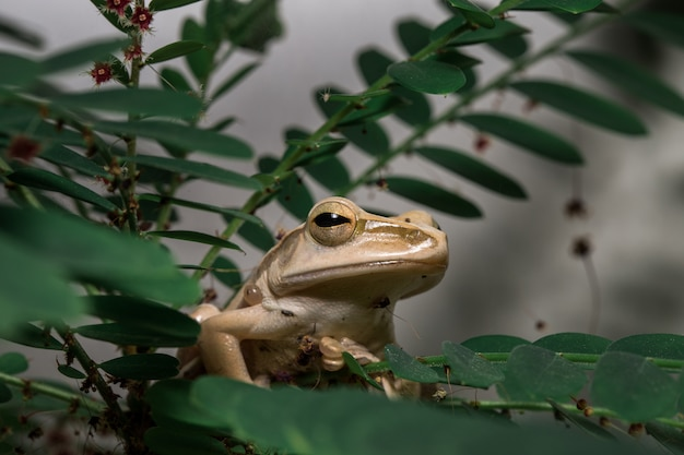 Brown tree frog on the tree