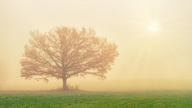 昼間の緑の芝生のフィールドに茶色の木
