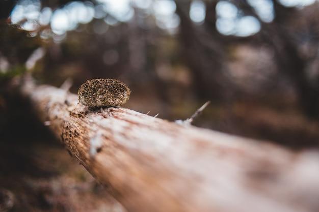 ティルトシフトレンズの茶色の木の幹